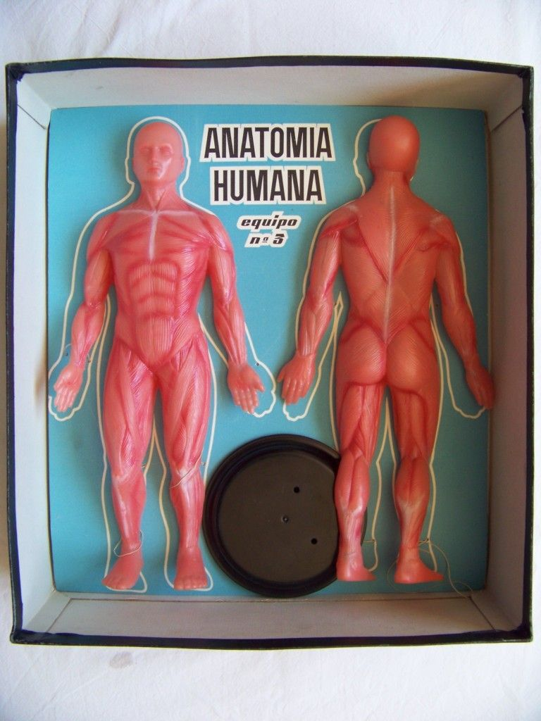 anatomia 4